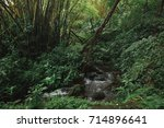 tropical forest in hawaii | Shutterstock . vector #714896641