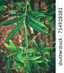 bamboo leaves | Shutterstock . vector #714928381