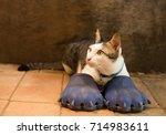 Funny And Very Cute Cat Wearing ...