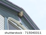 Paper Wasp Nest Attached To Th...