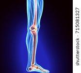 3d illustration of tibia   part ... | Shutterstock . vector #715081327