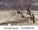 Dead Bed Creek And Trees Of Th...