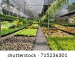 Plant tree in a pot farm for selling that have many different trees - stock photo
