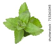 stevia leaves pieces isolated... | Shutterstock . vector #715261045