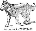 sketch of a husky dog on a walk | Shutterstock .eps vector #715274491