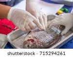 scientist surgery fish for... | Shutterstock . vector #715294261