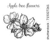 hand drawn apple tree flowers   Shutterstock . vector #715327261