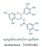 epigallocatechin gallate  egcg  ... | Shutterstock .eps vector #715351381