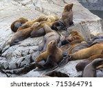 The Sea Lion Rookery. Islands...