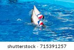 glad beautiful dolphin in blue...   Shutterstock . vector #715391257