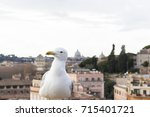 seagull looking sceptically in... | Shutterstock . vector #715401721