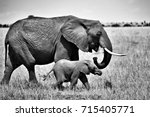 Stock photo mother and baby elephant 715405771