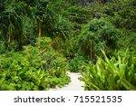 krabi  thailand   jun 20  2016. ... | Shutterstock . vector #715521535