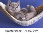 Stock photo sleeping kitten in a hammock 71557999