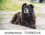 caucasian shepherd dog | Shutterstock . vector #715582114