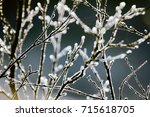 for earth watchers  phenology.... | Shutterstock . vector #715618705