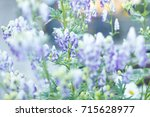 purple flowers background | Shutterstock . vector #715628977