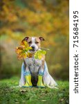 funny dog with wellies and... | Shutterstock . vector #715684195