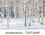 Snowy Birch Trunks And Branche...