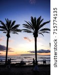 green palm canarian tree on the ... | Shutterstock . vector #715774135