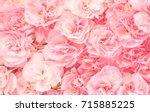 Pink Roses In Soft Color For...