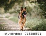 german shepherd  | Shutterstock . vector #715885531