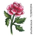 hand drawn watercolor peony  | Shutterstock . vector #715890394