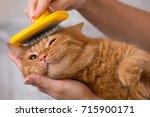 woman combing her redhead cat  | Shutterstock . vector #715900171