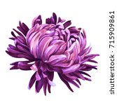 Bright Chrysanthemum....