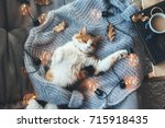 lazy cat is sleeping on soft... | Shutterstock . vector #715918435
