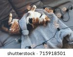 lazy cat is sleeping on soft... | Shutterstock . vector #715918501
