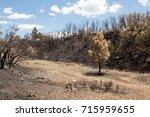 Small Dead Tree And Hillside...