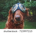an adorable golden retriever... | Shutterstock . vector #715997215