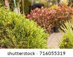 red and green leaves on the... | Shutterstock . vector #716055319