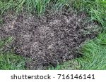 repairing lawn bare patch with... | Shutterstock . vector #716146141