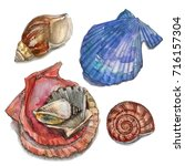 illustrations of sea shells.... | Shutterstock . vector #716157304