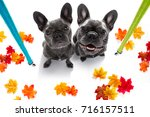 couple of french bulldog dog... | Shutterstock . vector #716157511