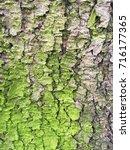 greenish bark of an old tree | Shutterstock . vector #716177365
