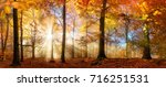 rays of beautiful sunlight in a ... | Shutterstock . vector #716251531