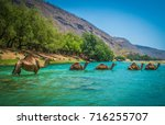 camels crossing a river at... | Shutterstock . vector #716255707
