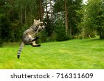 Cat Jumping And Playing On...