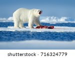 polar bear on the ice.... | Shutterstock . vector #716324779