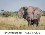 elephant standing in high grass ... | Shutterstock . vector #716347279