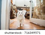 adorable white cat with a green ... | Shutterstock . vector #716349571