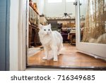 adorable white cat with a green ... | Shutterstock . vector #716349685