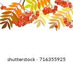 vector pattern autumn rowan... | Shutterstock .eps vector #716355925