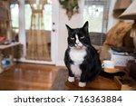 A Cute Black And White Cat...