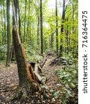 Long Fallen Tree Broken Log In...