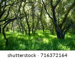 this is from a wilderness park... | Shutterstock . vector #716372164