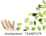 hop cones with ears of wheat... | Shutterstock . vector #716387179